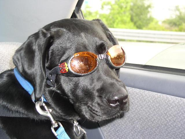 Looking stylish in some new Doggles