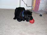 Playing with a Kong
