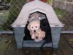 Piled up in their little dog house