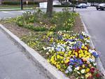 One of the many flower beds maintained by MUSC's groundskeepers