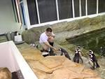 Offering a penguin a snack